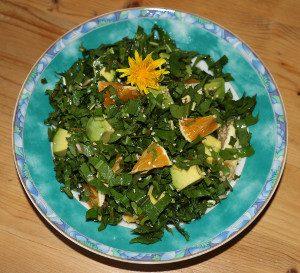 Löwenzahn-salat-2